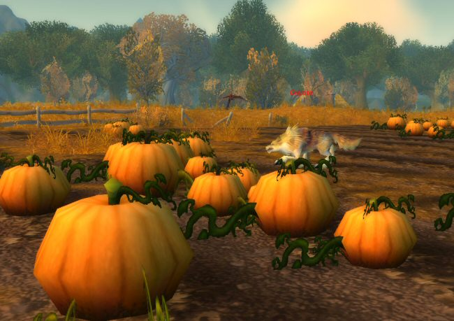I was going to ask why coyotes are doing in a pumpkin patch, but then I realized they're probably waiting for idiots like me to come along.